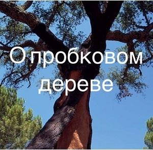 О пробковом дереве