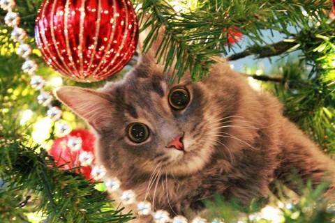 Как спасти ёлку от кошки И кошку от ёлки