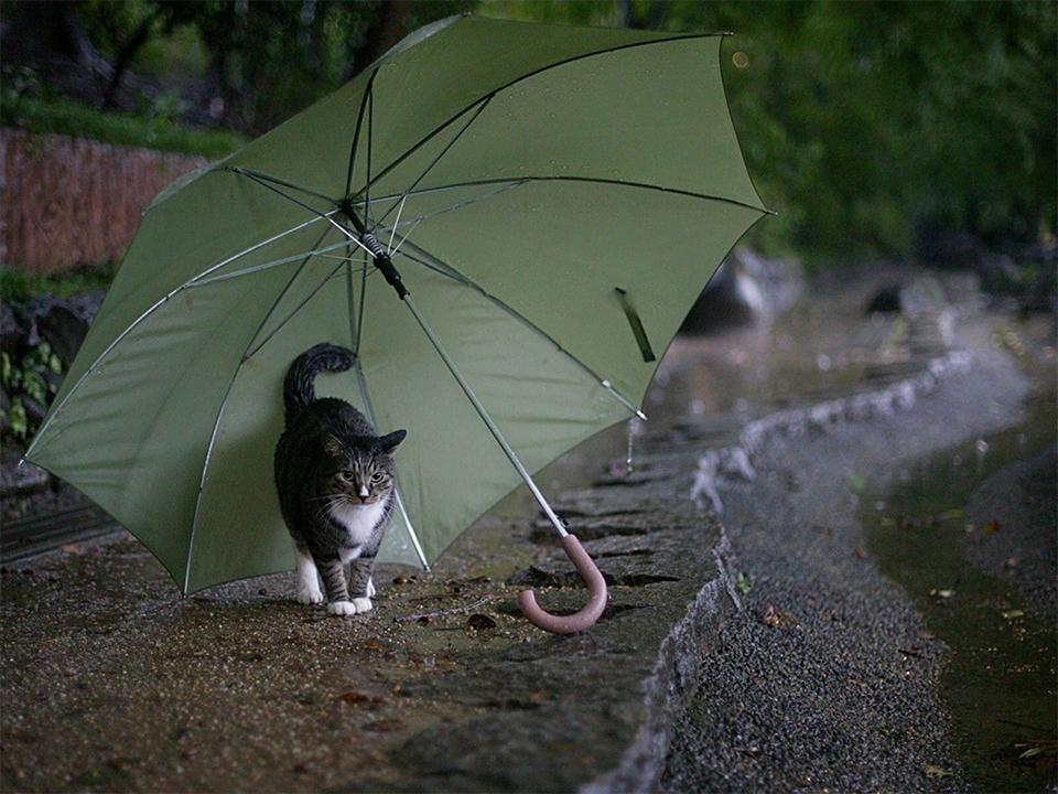 Самые красивые фото с зонтами