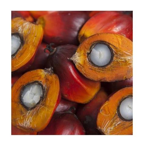 6 фактов о пальмовом масле