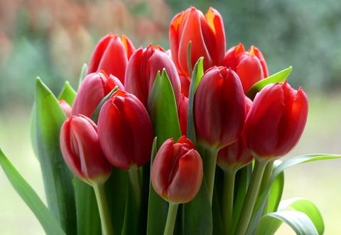 С праздником весны 8 марта!