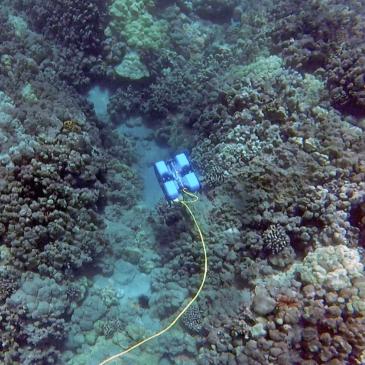 Барьерный риф под охраной роботов