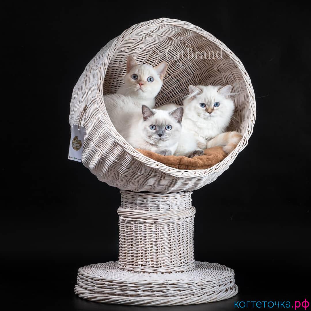 Стильный домик для кошек из лозы - Баюша - уже в продаже