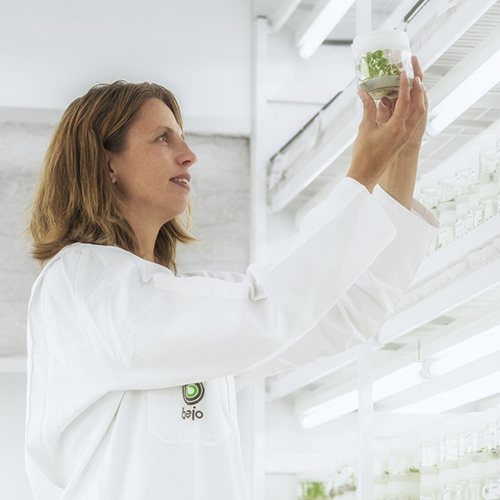 Улучшение здоровья растений начинается с улучшения сортов и здоровых семян