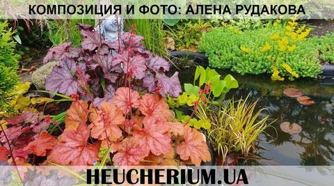 Прекрасная композиция из гейхер г.Николаев