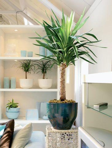 5 комнатных растений, которые можно подарить мужчине