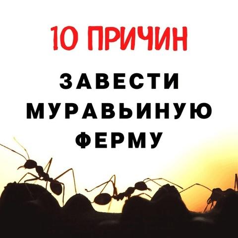 Почему муравьиные фермы так популярны?