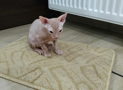 Теплый коврик обогревает кота