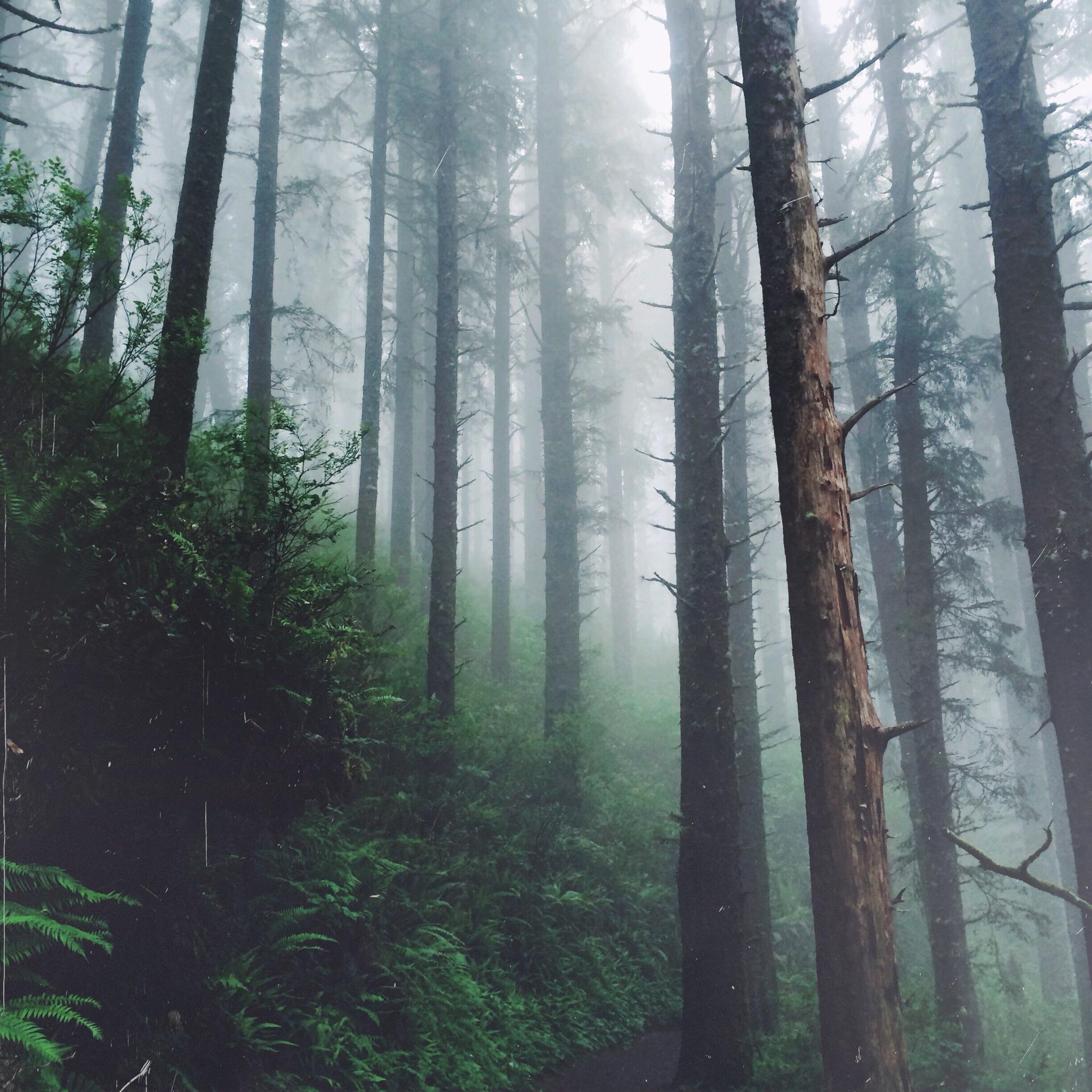 Тайга площадью 12  млн. км2  - самый большой лесной регион на Земле, потом идет Амазонка.