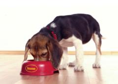 Рекомендации по кормлению щенка