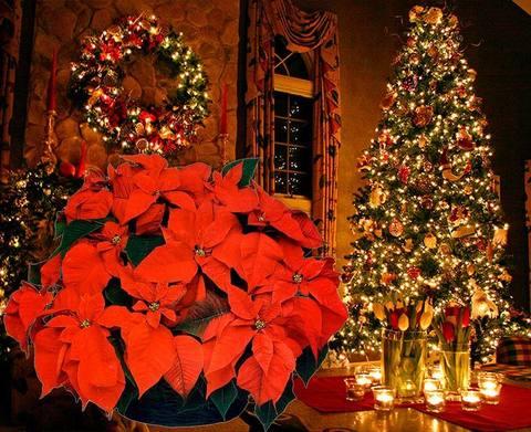 Топ живых подарков на новый год