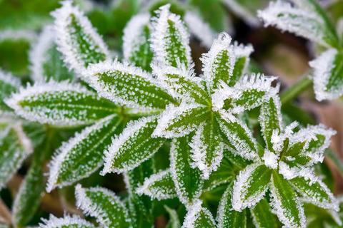 Какую температуру выдерживает укрывной материал?