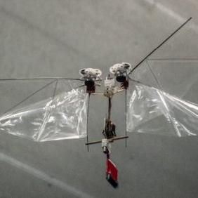 Мушка-дрозофила стала прототипом дрона