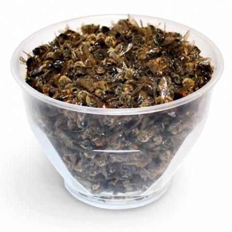 Научная статья: Некоторые особенности состава и свойств тел медоносных пчел и экстрактов из них
