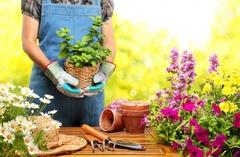 Уход за растениями в весенне-летний период.