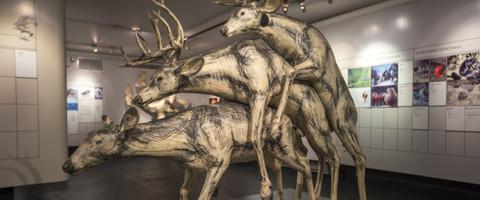 Небольшой экскурс по Нью-Йоркскому музею секса