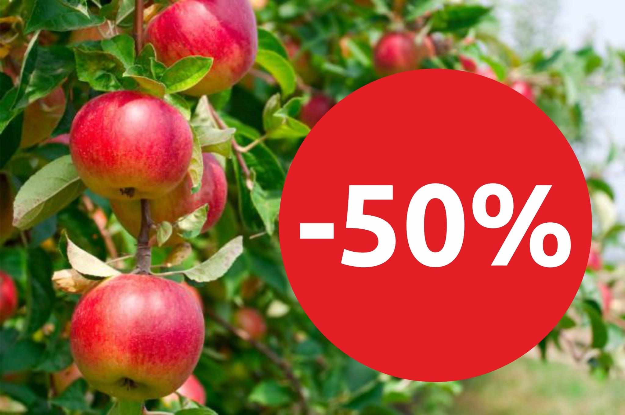 -50% на плодовые с открытой корневой системой