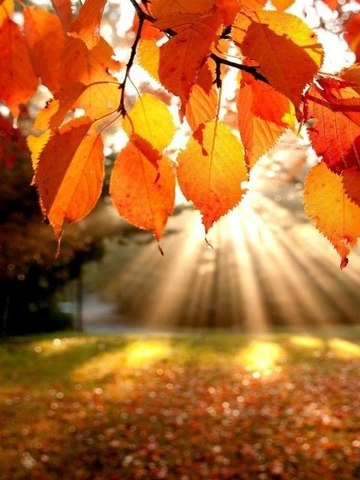 А вы готовы к осени?