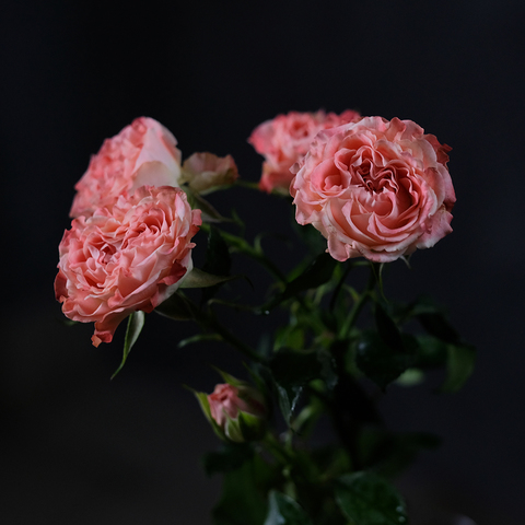 Эквадорской розы не будет!