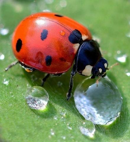 Какой укрывной материал защитит урожай от насекомых?