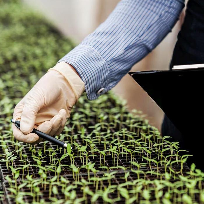 Селекция сортов и гибридов овощных культур