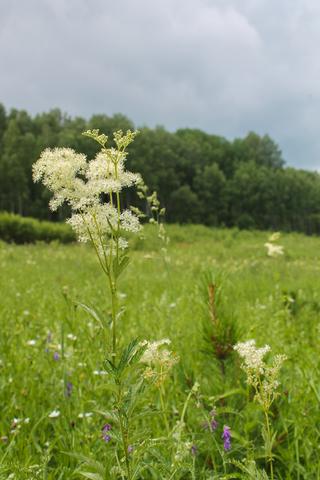 Весной организм очень нуждается в заботе и внимании - наши травяные сборы не лечат, но они точно помогают не болеть)