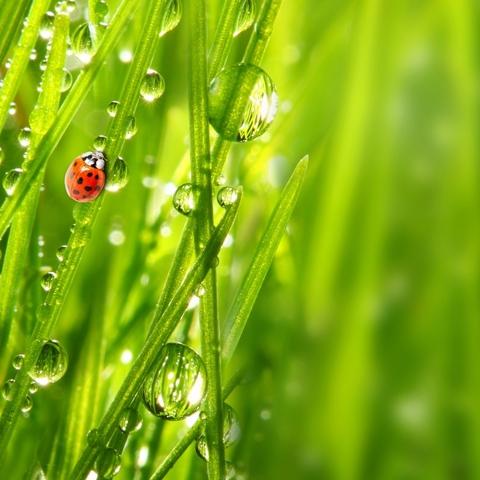 -10% на газонную травосмесь