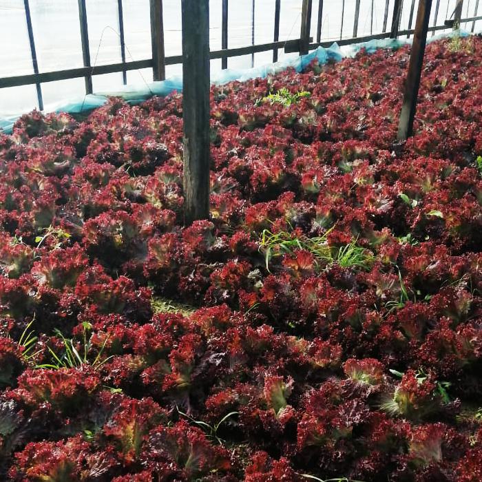 Красные салаты - такие яркие, такие разные