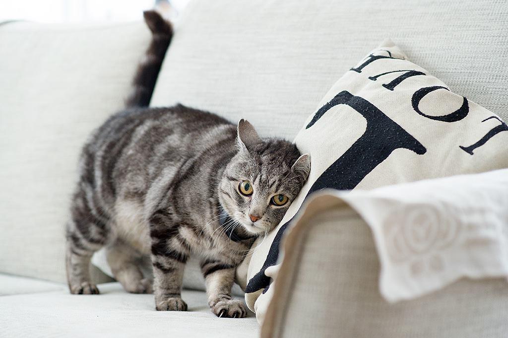 Как искать кошку или собаку, если они потерялись?