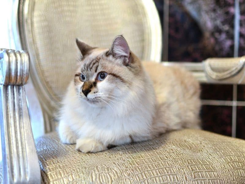 Как выбрать ткань для мебели, если в доме есть животные