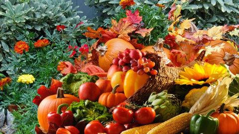 Осенняя обработка в саду.
