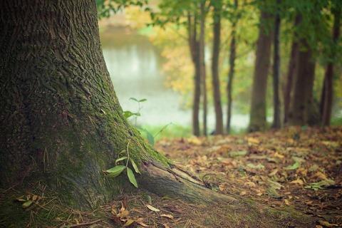5 пород дерева, из которых делают межкомнатные двери.