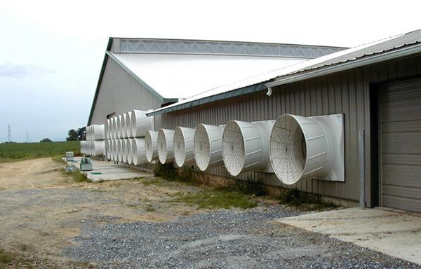 Вентиляция ферм КРС – формирование микроклимата