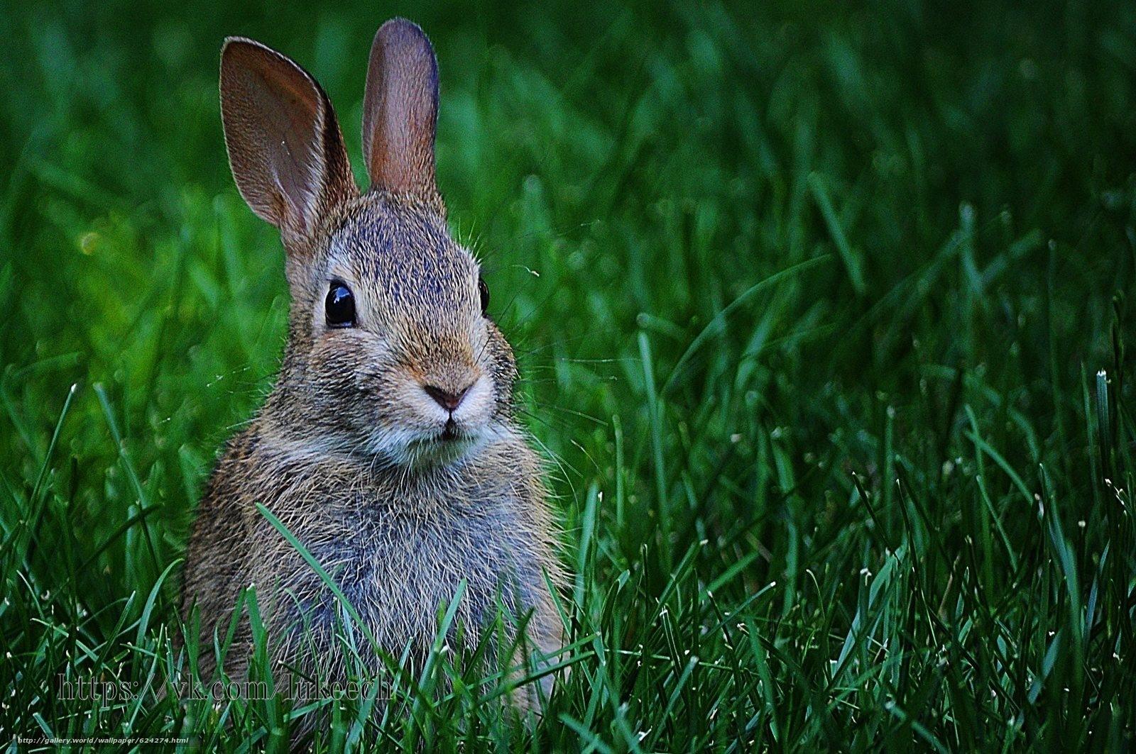 Главное у зайца: лапы, уши и хвост