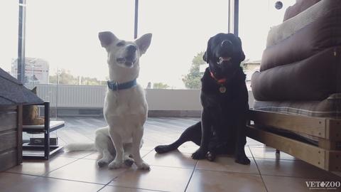Дві собаки розгромили наш магазин