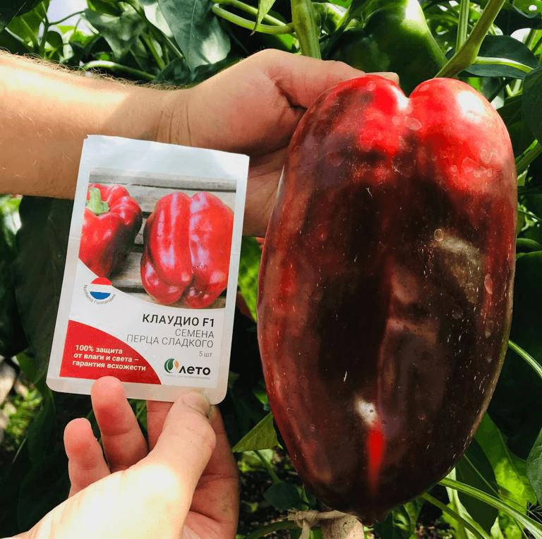 Узнай технологию выращивания сладкого перца от компании ЛЕТО для получения наилучших результатов!