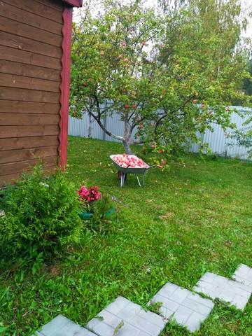 Как защитить огород в августе?