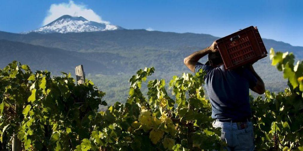 Виноделие Этны берет новые высоты