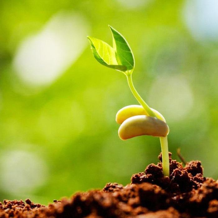 Хозяйственная долговечность семян