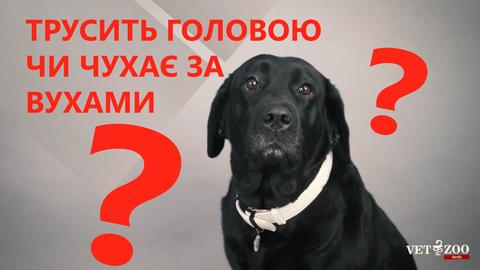 Собака трусить головою чи чухає за вухами?