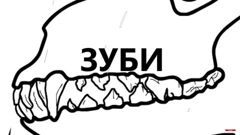 Vetzoo Family - про зуби...