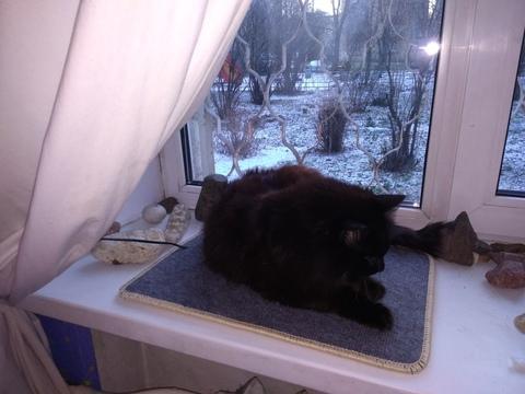 Теплый коврик обогревает подоконник и кота