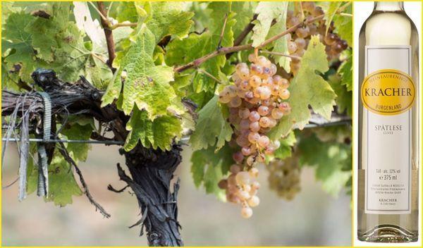 Вино недели с 23 апреля - Kracher Cuvee Spatlese