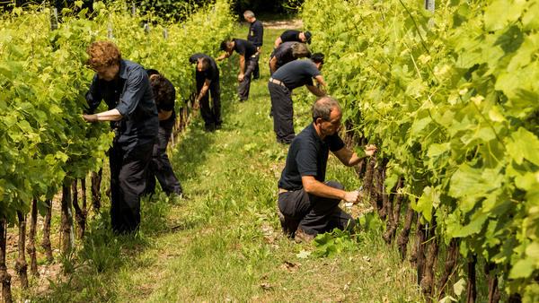 Tenuta San Leonardo получило статус Organic Farm