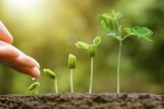 Разум и чувства растений.