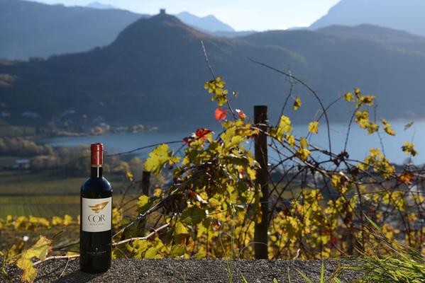Вино недели с 21 августа - Cor Romigberg Cabernet Sauvignon