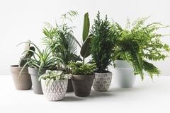 Полезные растения  для дома.