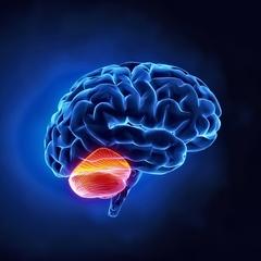 Учёные доказали: Тренировки равновесия и баланса улучшают работу памяти и когнитивные способности человека