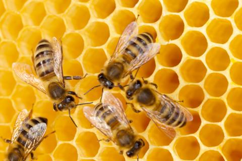 Инфракрасная плёнка для обогрева пчелиных ульев