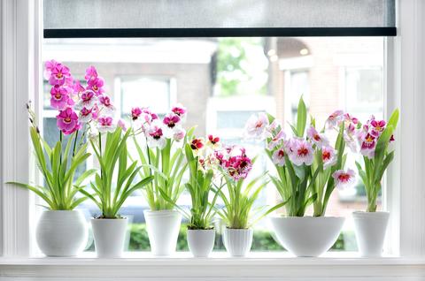 Как поливать цветы, когда вас нет дома?